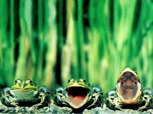 3-frogs-on-a-log